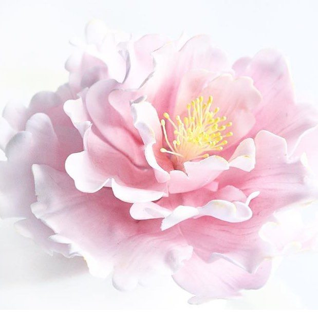Make this stunning peony and other sugar flowers with wildflowercakeshellip